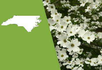 North Carolina Flower by North Carolina State Flower The Flowering Dogwood