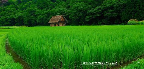 greenery hariyali slogans  hindi