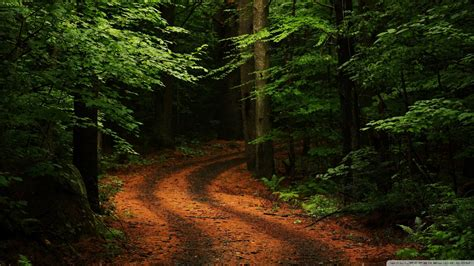 wallpaper windows 10 path path in the forest wallpaper dottech