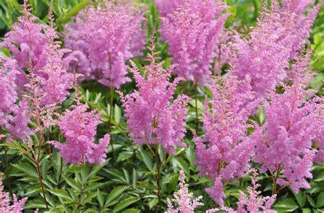 bulbacee da fiore identification of perennial flowers made easy