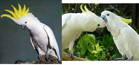biologi edutainment bab iv pelestarian hewan dan tumbuhan