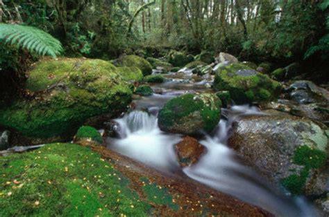 imagenes de sonidos naturales club cient 237 fico bezmiliana 187 sonidos de la naturaleza