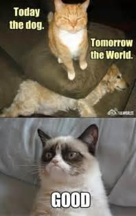 Dog Cat Meme - grumpy cat vs dog memes