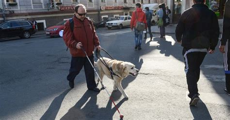 puppy transport service uber agrees to transport service dogs for blind passengers wide open pets