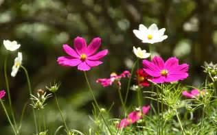 best flowers best flower for gardening beginner youtube