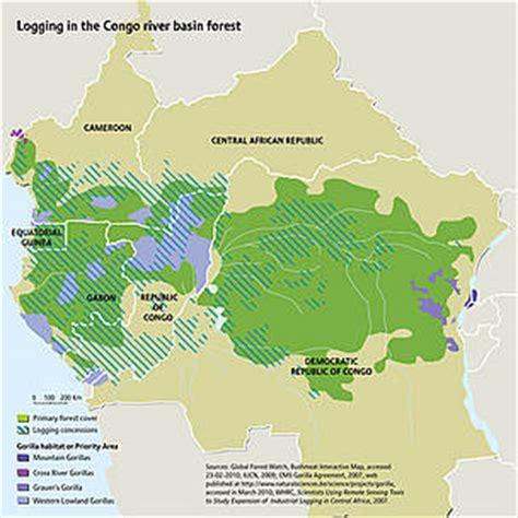Western lowland gorilla   WWF