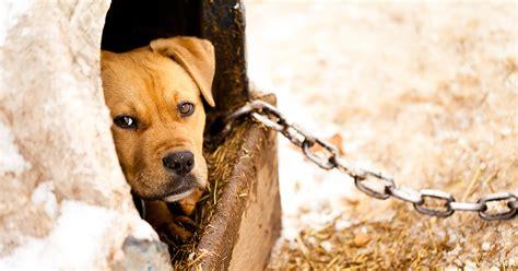 JoinASPCA.org   ASPCA