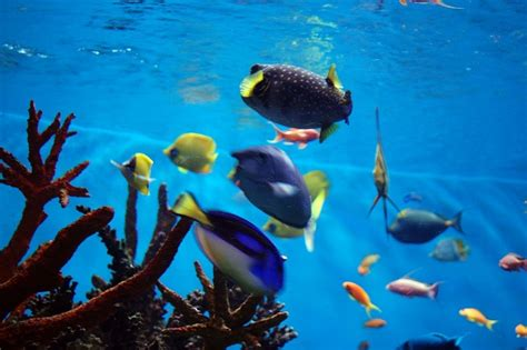 Swimming Fish L by Colored Fish Swimming In Water Tank 4 Free Photos Highres