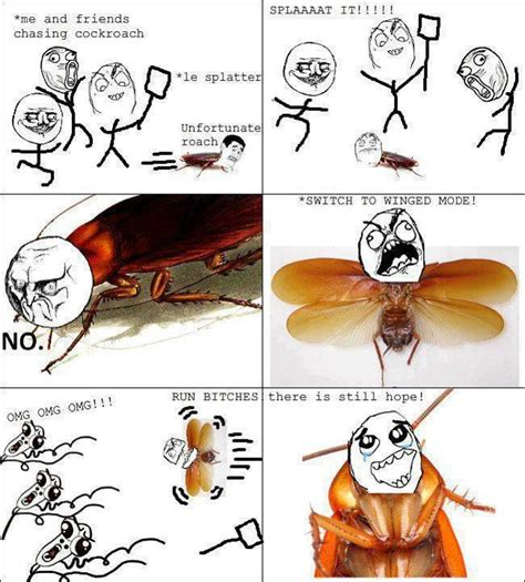 cockroach flying meme by pupurin memedroid