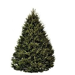 hilltop christmas trees available for home delivery pr com