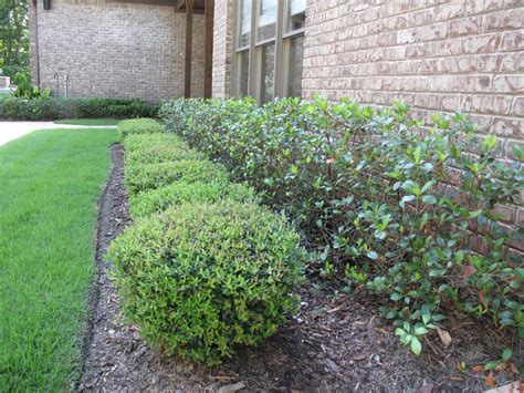 Bushes For Landscaping Smith Shrub Landscape Quality Creative Landscaping Llc