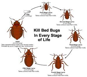 how to treat bed bugs yourself bed bugs treatment new jersey eastern bed bug control