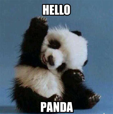 Cute Panda Memes - 20 incredibly cute and funny panda memes sayingimages com