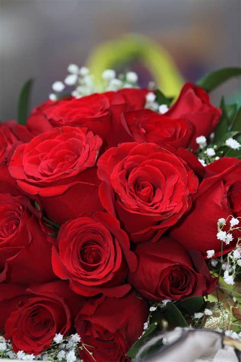 Dress Merah Bunga Mawar sahabat macam macam bunga mawar