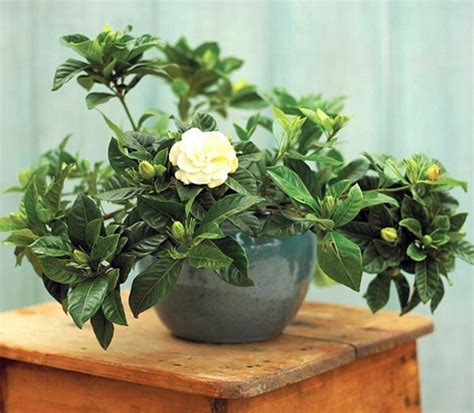 plants that need little light houseplants that need little light interior design ideas avso org
