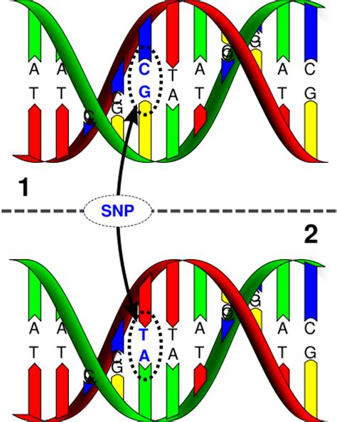 Gene Snp Detox Test by Snp S Genetics Generation