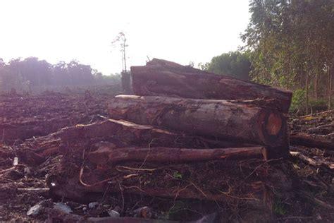 Hukum Kehutanan Di Indonesia 1 departemen kehutanan mongabay co id