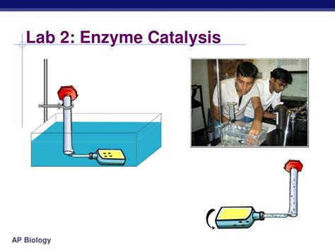 design an enzyme experiment ppt ap biology powerpoint presentation id 302778