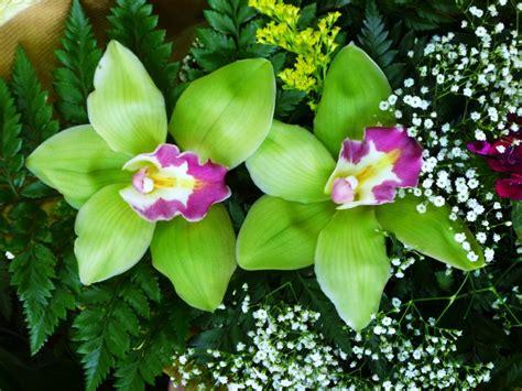 imagenes de orquideas verdes orqu 237 deas verdes foto de ant 243 nio olhares fotografia online