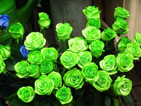 imagenes verdes de amor imagenes gifs rosas verdes