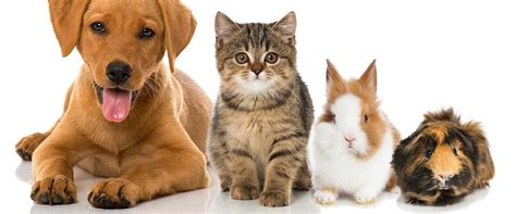 Hund Und Katze In Einem Haushalt 3861 by Hund Und Katze In Einem Haushalt Hund Und Katze Unter
