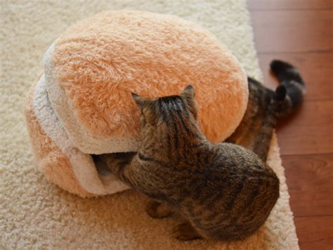 Cat Hamburger Pillow by Transform Your Into A Burger With This Pillow