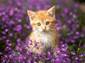 beautiful kittens most beautiful cats wallpapers hd photos images download