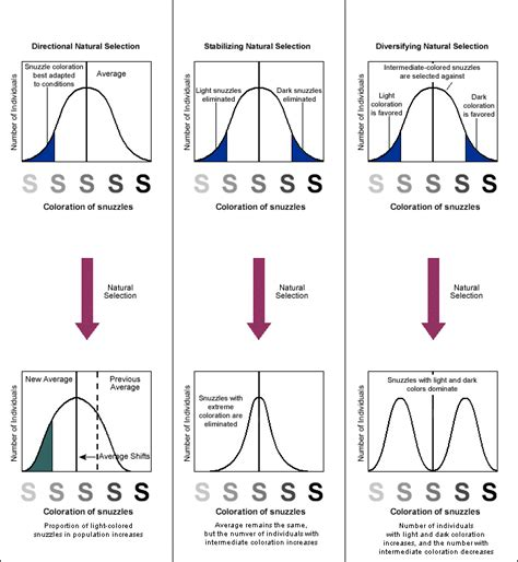 javascript pattern whitespace brownapreview evolution