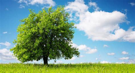 oroscopi porto l oroscopo celtico quale albero sei cammina nel sole