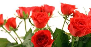 how much are a dozen roses how much does a dozen roses cost ehow uk
