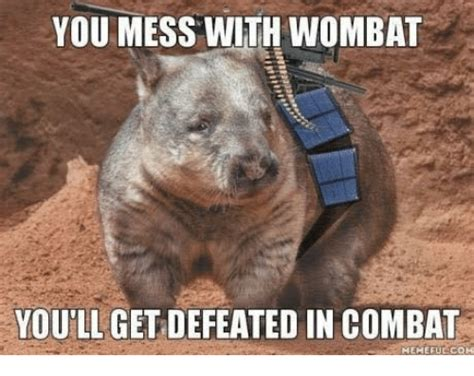 funny wombat memes of 2017 on sizzle the oldest
