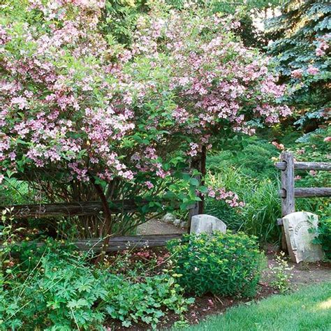 flowering shrubs for zone 9 flowering shrubs shrubs and hedges on
