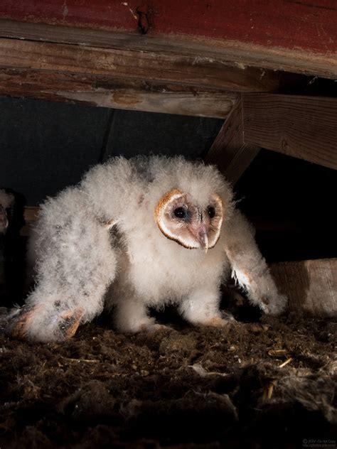 awesome owls part  lolz  real sasha
