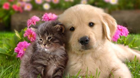 imagenes reino animal las mejores im 225 genes del reino animal en el foro u n l