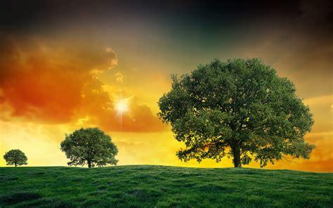 Sunset Field Trees Landscape Clouds Wallpaper 1920x1200