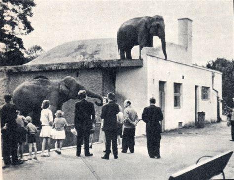 Zoologischer Garten Warschau by The Zoo That Saved Jews From The