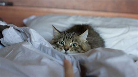 i letti piã belli mondo come affrontare la prima notte insieme al gattino
