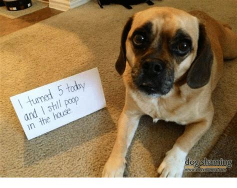 dog poop in house today 5 turned poop i and house in the dog shaming meme