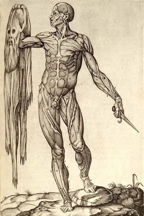 Drawing Anatomy by Research Anatomy Photo Skills B Cyborg