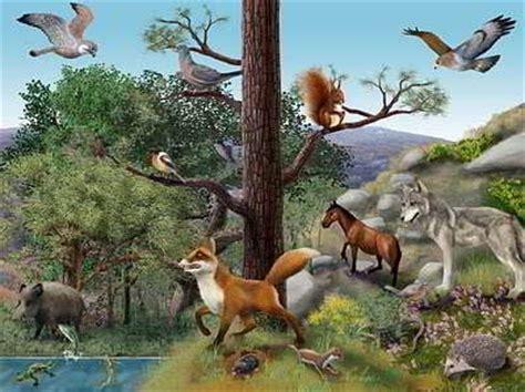 imagenes de ecosistemas naturales ecosistema ecosistema terrestre