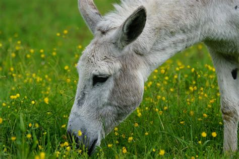 donkeys cool facts coloring kids