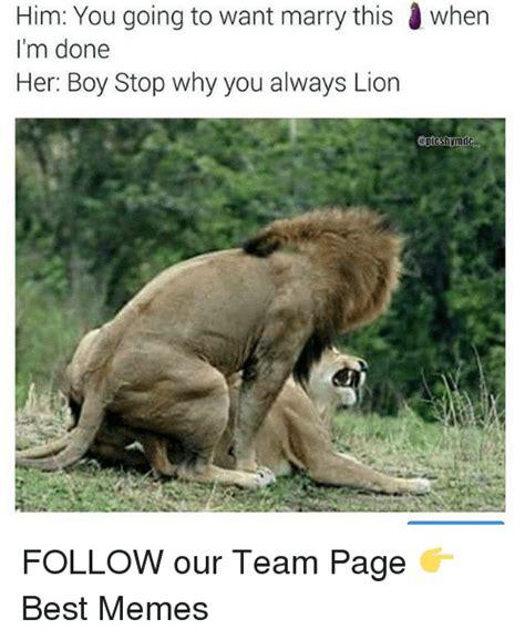 Lion Sex Meme - image gallery marry lion