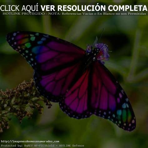 imagenes de mariposas reales bonitas fondo de pantalla con fotos de mariposas reales im 225 genes
