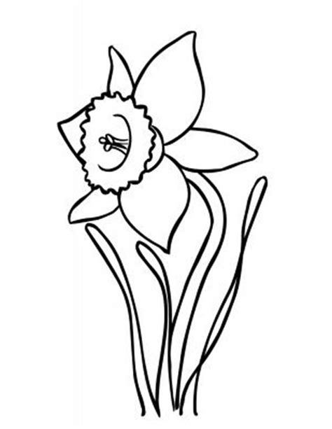 daffodil outline clipart best