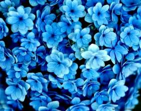 blue flowers blue flower photography 1280x1024 best hd wallpapers