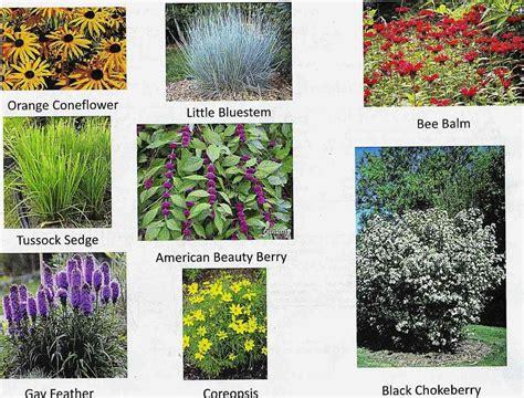 types of landscaping plants randicecchine com