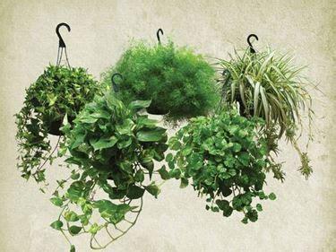 piante ricadenti da interno oltre 1000 idee su piante da interno su piante