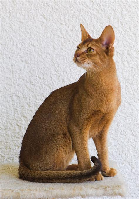 Alas Kandang Tarantula kucing abyssinian jual peralatan perlengkapan dan