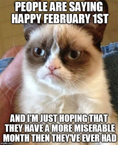 Miserable Cat Meme - grumpy cat meme imgflip