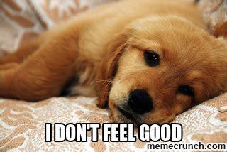Sick Puppy Meme - sick puppy
